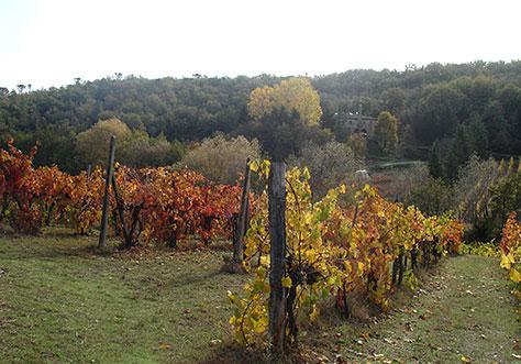 autumn_vines